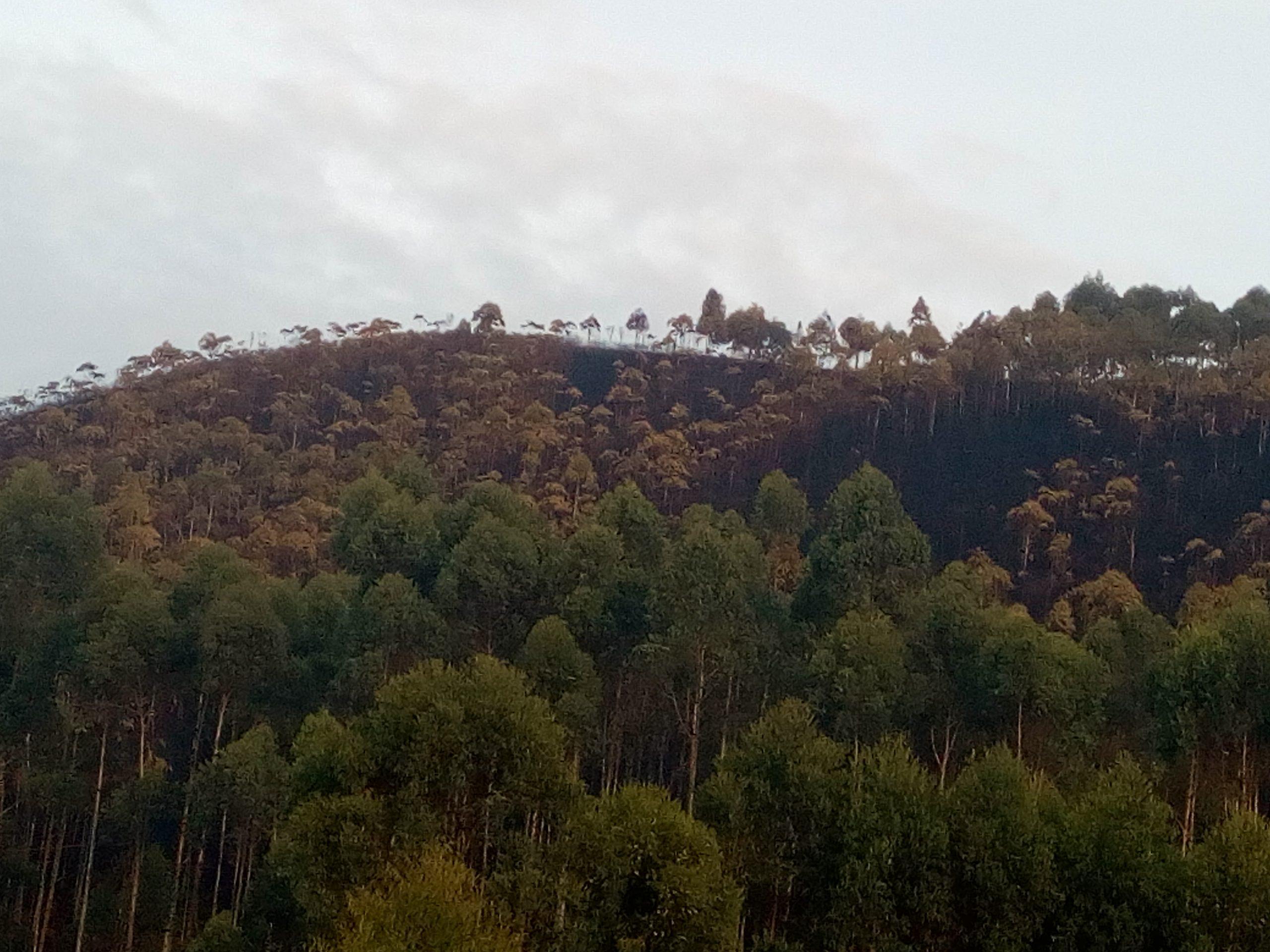 Butembo/UCG : Une pluie providentielle éteint le feu de brousse qui venait  d'embraser le Mont Tabor