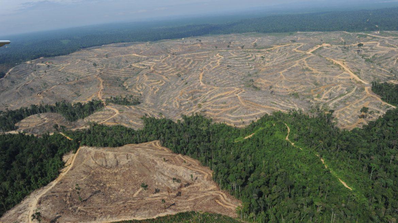 Environnement : La RDC vice-championne de la déforestation après le Brésil. Lamentable. (Global Forest Watch)