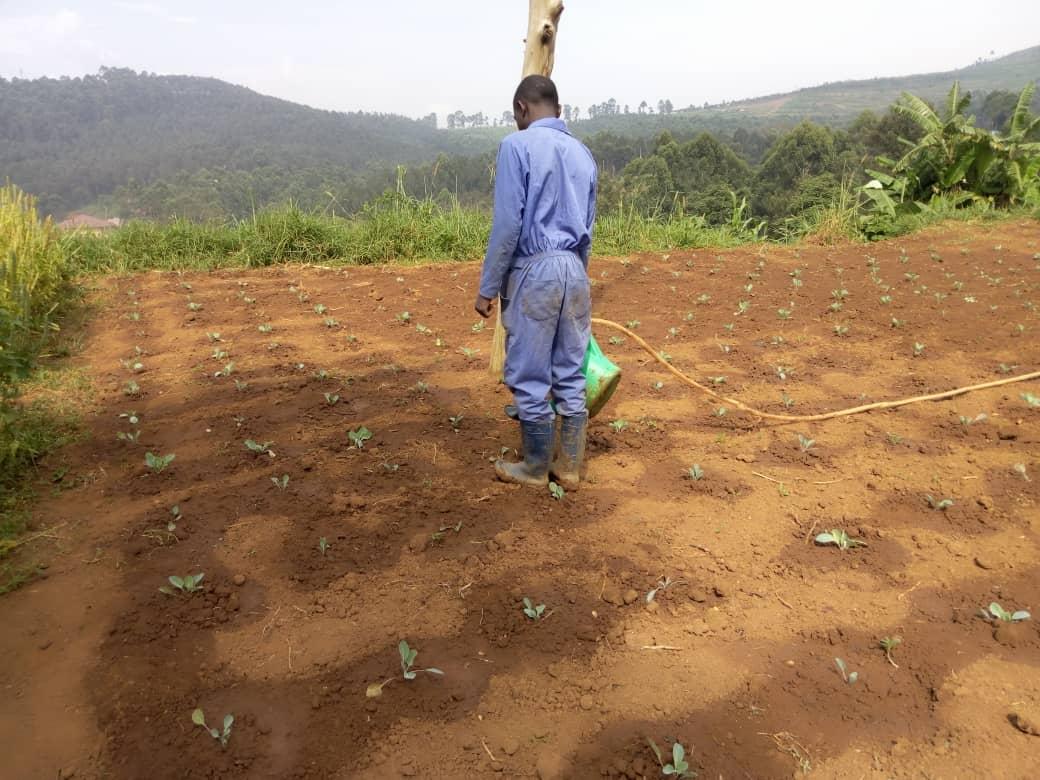 Société : La sécheresse actuellement vécue à Butembo et environs pourrait impacter la production agricole. (Prof SahaniWalere)