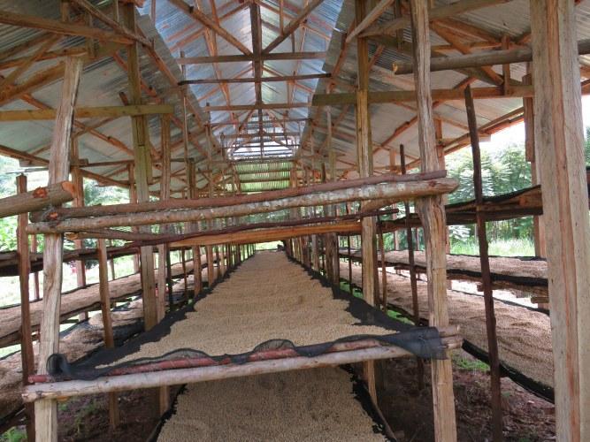 Nord-Kivu : « Standardiser le traitement du café et du cacao pour espérer une bonne rémunération sur le marché international » (Ivan Godfroid, Dir Régional Rikolto)