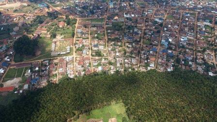 RDC-Bois : l'eucalyptus, une alternative pour la préservation des forêts au Kivu ?