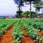 Nord-Kivu : Le PASA N-K forme ses partenaires sur le management des organisations locales à Butembo